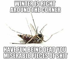 Winter is right around the corner funny sarcastic mosquito meme - PMSLweb Sarcastic Humor, Sarcasm, Funny Jokes, Hilarious, Old Memes, Fresh Memes, Around The Corner, Caravan, Humor
