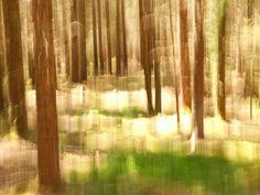 """""""Au fond des bois"""" By philippe berthier  Photography Support: TIRAGE D'ART Oeuvre numérotée, datée et signée par l'artiste. édition limitée à 10 tirages. Certificat d'authenticité. Livraison: envoi sous 6 jours. Size : 56 x 42 cm pkus sur www.passionartly.fr"""
