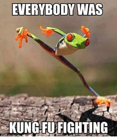 Everybody was Kung Fu Fighting - Funny Animals with Captions LOL