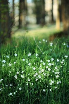 I love some pretty flowers