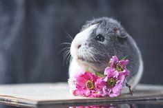 miepstheguineapig: Flower piggy!