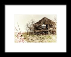 Barn Framed Print featuring the photograph Rickety Shack by Pamela Williams