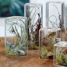 "I have a couple of glass pieces with tillandsias (""air plants"") in them.  They are easy to maintain, don't require dirt, and look amazing!"