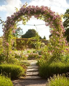 Rachel de Thame tutorial: supporting plants   Home   The Times & The Sunday Times