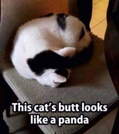 This cats butt looks like a panda meme