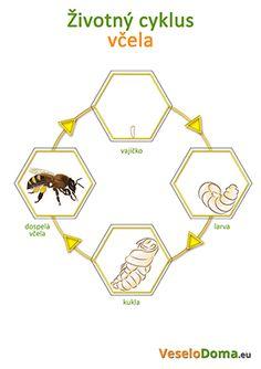 životný-cyklus-maličký-1.jpg (278×394)