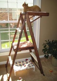Torre suspensa para gatos feita com uma escada