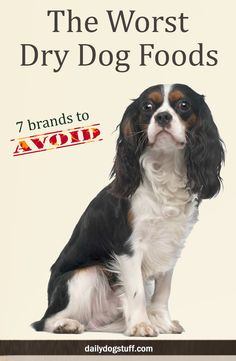 The Worst Dry Dog Foods… (7 Brands to Avoid) | Daily Dog Stuff