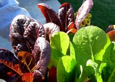 Want to grow vegetables, but don't have a sunny garden? Fortunately, there are several vegetables and herbs that tolerate less sunlight. Here are some of the best shade-tolerant vegetables to consider for your gardens.