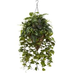 Nearly Natural Vining Mixed Greens with Cone Hanging Basket ($95) ❤ liked on Polyvore featuring home, home decor, floral decor, green silk flowers, green artificial flowers, watering can, nearly natural and green basket
