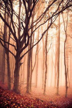 Autunno nei boschi di #Subbiano, nella valle del #Casentino, provincia di #Arezzo (#Toscana).