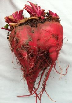 My heart beets for you = Alm Hill Farms @West Seattle Farmers Market