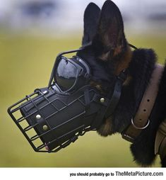Military working dogs have been a part of our military dating back to the first World Wars. Fast forward to the current conflicts in Iraq and Afghanistan Military Working Dogs, Military Dogs, Police Dogs, Military Photos, Military Dating, Dog Muzzle, War Dogs, Belgian Malinois, Belgian Malamute