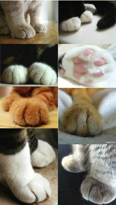 Very interesting post: TOP 50 Funny Cats and Kittens Pictures.сom lot of interesting things on Funny Animals, Funny Cat. Cute Kittens, Cats And Kittens, Beautiful Cats, Animals Beautiful, Cute Animals, Pretty Cats, I Love Cats, Crazy Cats, Cat Paws