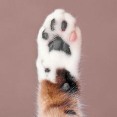Oh my goodness i want to hold this kittens paw I Love Cats, Cute Cats, Funny Cats, Funny Animals, Cute Animals, Crazy Cat Lady, Crazy Cats, Cat Paws, Dog Cat