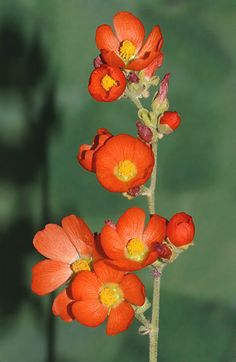 Plants Bush With Red Orange And Yellow Flowers In