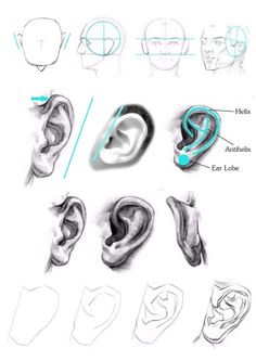 How To Draw An Ear Proko