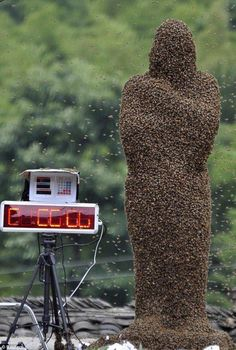 A Chinese competition: how many bees on the human? GROSS