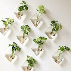Mkono 2 Pack Wall Hanging Plant Terrarium Glass Planter, Diamond