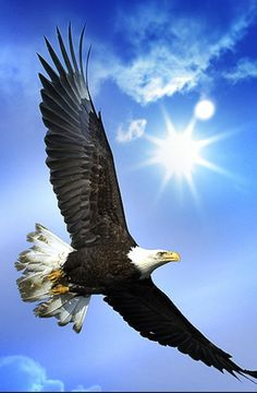 Screaming Eagle Wallpaper Birds Animals Wallpapers) – Wallpapers and Backgrounds Eagle Images, Eagle Pictures, Pictures Of Bald Eagles, Wings Like Eagles, The Eagles, Beautiful Birds, Animals Beautiful, Beautiful Life, Eagle Wallpaper