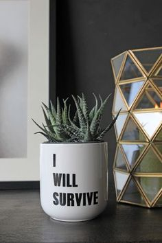 I Will Survive Plant Pot - this just about sums up our house plants (or lack of them)!