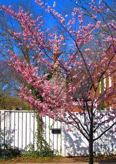 Love flowering trees in the Spring