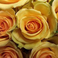 Rose idole.  #florist #florists #flower #flowers #perrifarms #wedding #weddings #floral #cutflower #cutflowers #roses #rose