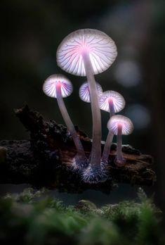 Rants about politics, Sci-fi. Comic books, and Star wars All rights reserved byAzrael Stone Mushroom Art, Mushroom Fungi, Wild Mushrooms, Stuffed Mushrooms, Mushroom Pictures, Plant Fungus, Psy Art, Macro Photography, Amazing Nature