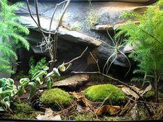 Temerate Forest Vivarium