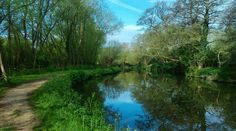 What a beautiful day! So pleased I went for a walk this morning. #riverwey