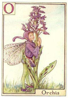 http://www.wellandantiquemaps.co.uk/lg_images/The-Orchis-Fairy.jpg