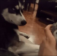 Funny animal gifs - part 285 (10 gifs)