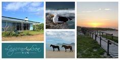 Lagoon and Sea Address: Middelsvlei Estate, Hermanus Tel: 072 272 27299 / 072 9100 656 Email: info@LagoonAndSea.co.za