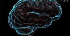 Focus.de - Mini-Gehirn in Erbsengröße: US-Forscher züchten erstmals menschliches Gehirn im Labor - News