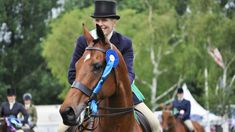 1000+ images about Horses on Pinterest Thoroughbred, Dutch Warmblood ...