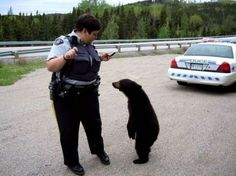 I swear, officer, its not my honey! I'm just holding on to it for a much bigger bear than me.