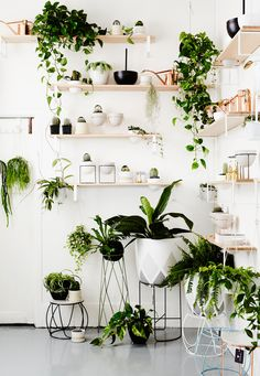 Indoor plants are so hot right now in homewares, so if you're going to start an indoor jungle you need to do it in style. | huntingforgeorge.com
