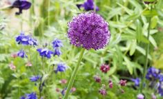 Choose the best winter and summer flowering plants and shrubs with these planning ideas to enjoy wonderful colour in your garden all year-round. All Year Round Plants, Year Round Flowers, Summer Flowers To Plant, Home Flowers, Planting Flowers, Colorful Plants, Colorful Garden, Summer Bedding Plants, Cottage Garden Plants