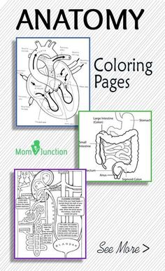 Top 10 Anatomy Coloring Pages-in my browser, several of the download buttons were covered by ads, but these are still excellent and for the most part, accessible. #STEM #science