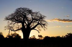 Du kruger au Cap - Un rêve d'Afrique du Sud - Voyageurs du Monde. © Wilderness Safaris Nature Sauvage, Safari, Celestial, Sunset, Holiday, Outdoor, Sustainable Tourism, South Africa, Adventure