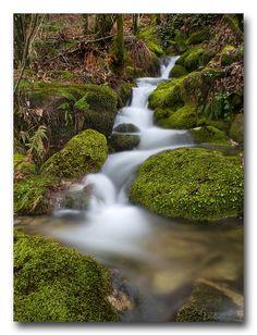 Arroyo en el parque natural Monte Aloia (Pontevedra) | by jose.singla