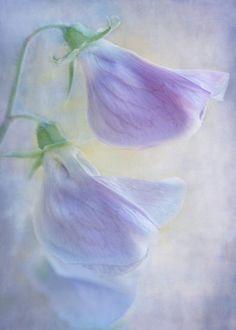 jaunty by Teresa Pople