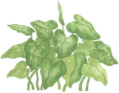 Quickly and easily create an exotic jungle inspired design in your home with our Rainforest Philodendron 2 Stencil!