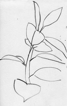 plant, sketch, drawing, pencil