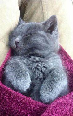 Little gray cat via FACEBOOK