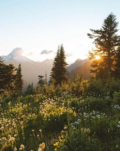 photo scenery A typical summer sunset, hiking through fields of wildflowers Beautiful World, Beautiful Places, Landscape Photography, Nature Photography, Nature Aesthetic, Summer Aesthetic, Quelques Photos, Felder, All Nature