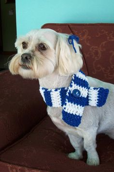 Crocheted dog scarf. I've gotta make this for my dogs :)