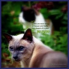 psychic cats cheung theresa