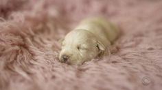 Ensaio newborn busca chamar a atenção para filhotes abandonados (Foto: Reprodução/RBS TV)