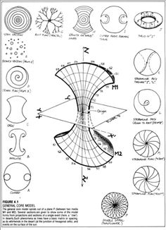Pattern Model's Relation - General Core Model by Bill Mollison. From the permaculture design manual. Every natural pattern form in the known universe can be found within a tree.